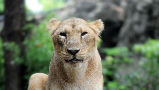過去1年間に死亡した動物たちのための慰霊祭を開催します。上野動物園では来週、2017年9月23日㊏1…