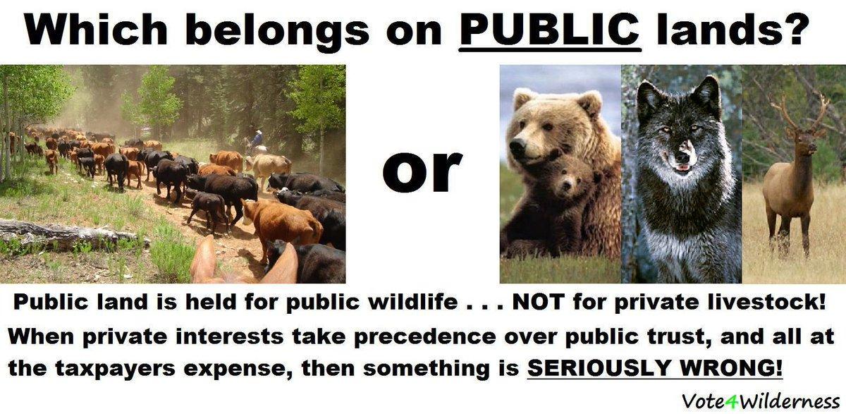 .@JohnKennedyLA @ChrisMurphyCT @SenatorDurbin @SenatorCollins No #roundups #nokill #wildhorses  thank you! <br>http://pic.twitter.com/45GuIGtSCq