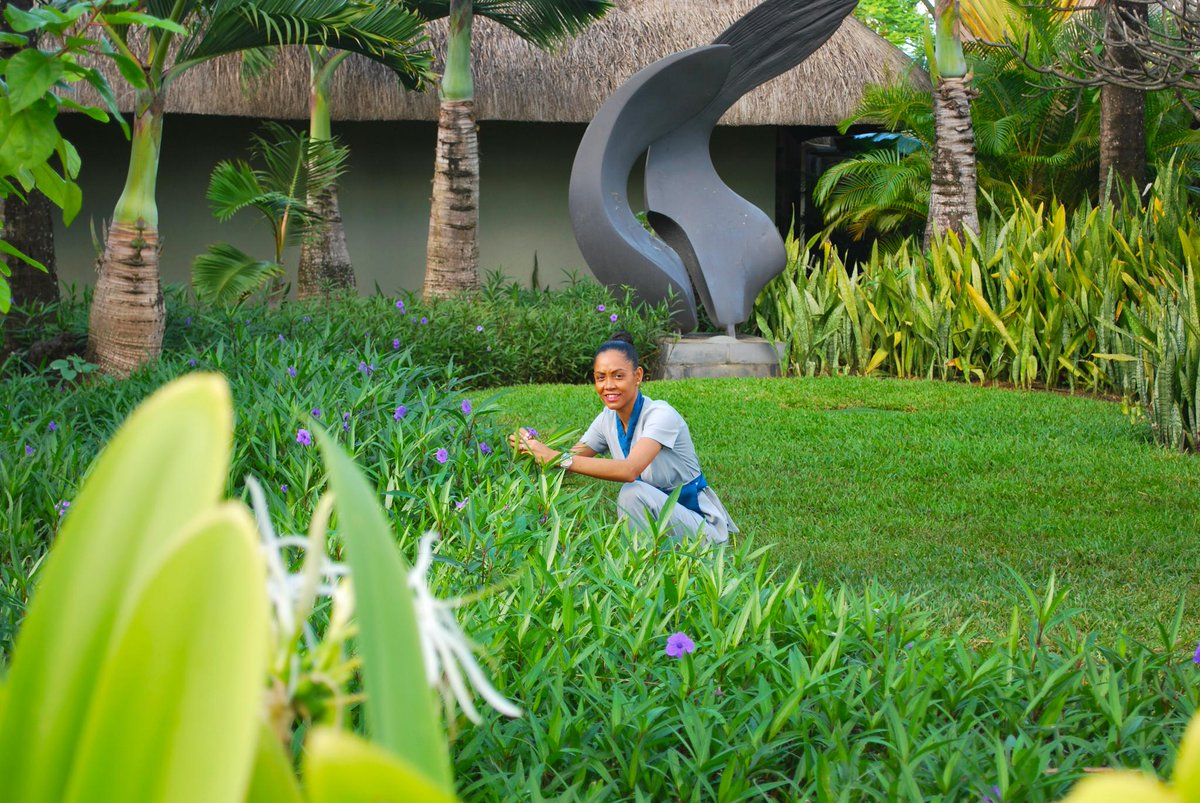 Sylvia plucks flowers to decorate the #Spa reception everyday. Meet her in our gardens during your stay #FourSeasons #Mauritius #SundayShare <br>http://pic.twitter.com/cy2EIDBLXG