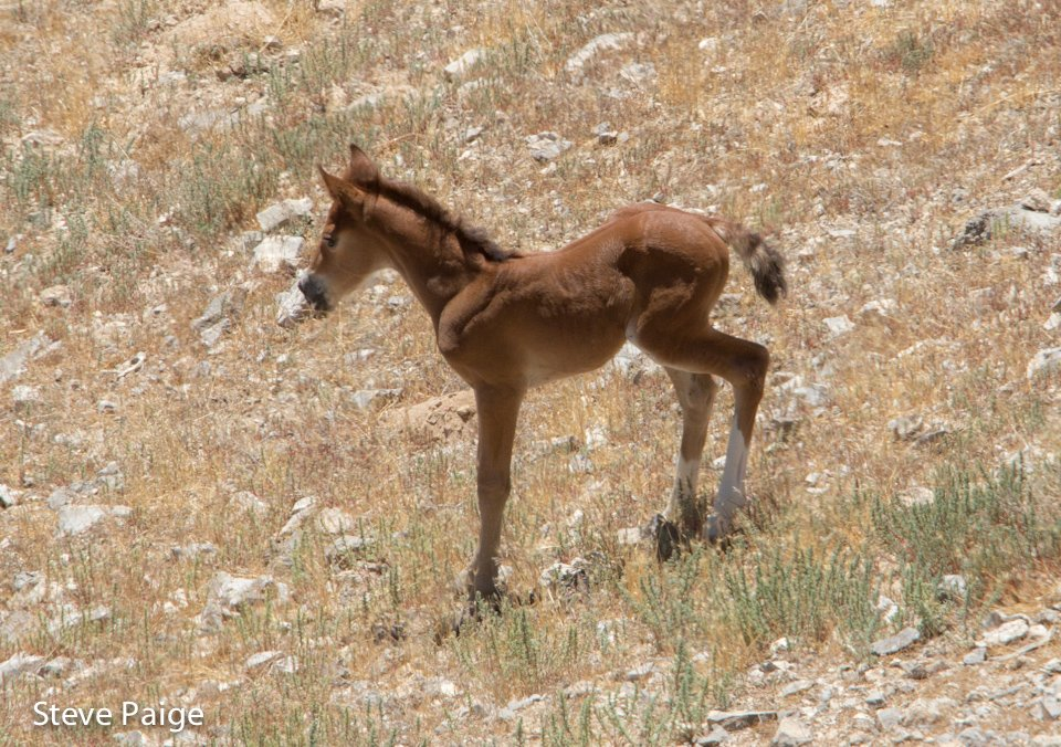Heartbreaking and infuriating: Foal separated from family band, abandoned as 10 Colorado #wildhorses captured:  http:// returntofreedom.org/2017/09/17/10- colorado-wild-horses-captured-foal-separated-from-band/ &nbsp; … <br>http://pic.twitter.com/YlGbGNxdmr