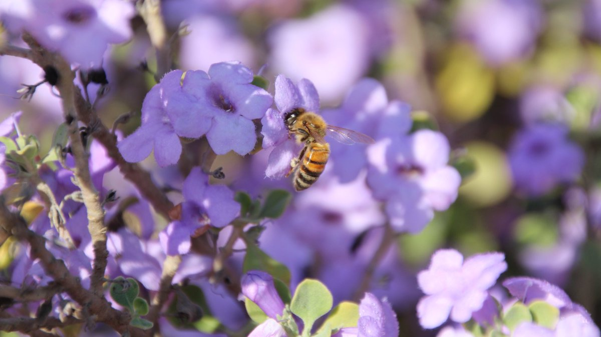 Our researchers may have the answer to why #bees are dying at alarming rates. https://t.co/CyI70gW28Y https://t.co/pVgemJeCyU