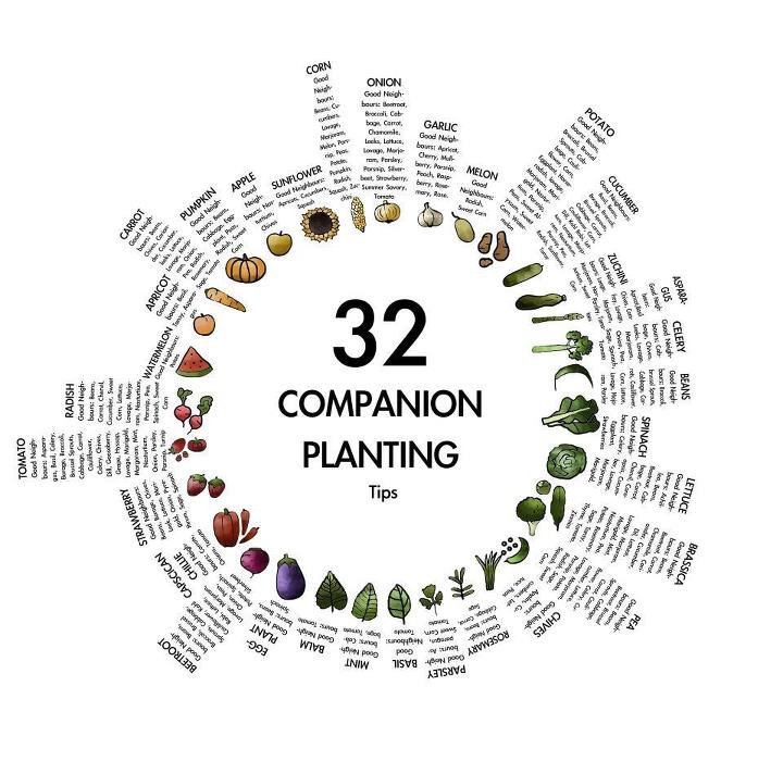 YOU CAN GROW ORGANICALLY WITHOUT PESTICIDES   https://www. facebook.com/theseedguy/  &nbsp;   Seed Guy Seed Pkgs  https:// theseedguy.net/en/15-seed-pac kages &nbsp; …  #gardenchat #seeds #preppers<br>http://pic.twitter.com/Ct9KXB0h7M