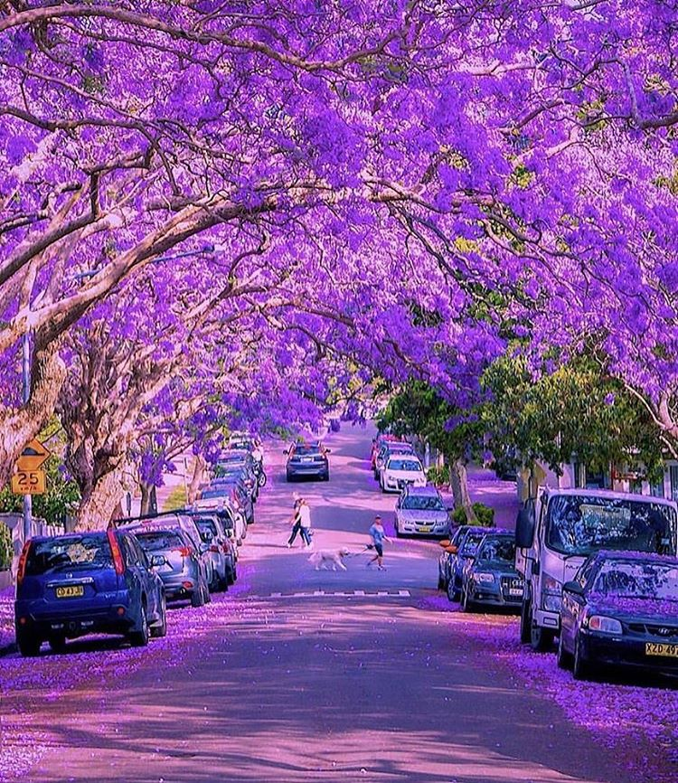 Stunning #Trees of our #Planet #Earth<br>http://pic.twitter.com/NND9OPD90g