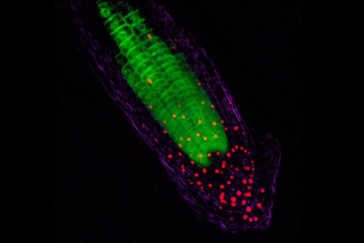 Amazing plants can &#39;see&#39; underground by channeling light to their roots:  http:// ow.ly/747j30f9ZYo  &nbsp;   #ScienceSunday <br>http://pic.twitter.com/na9njvyg5B