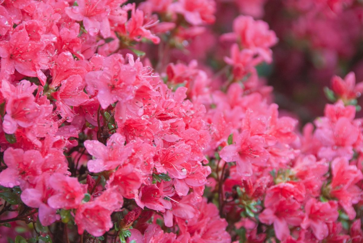 Best Flowers For Allergy Sufferers #flowers #gardening #allergies  https:// buff.ly/2xbmZQp  &nbsp;  <br>http://pic.twitter.com/8ACwmo7XJC
