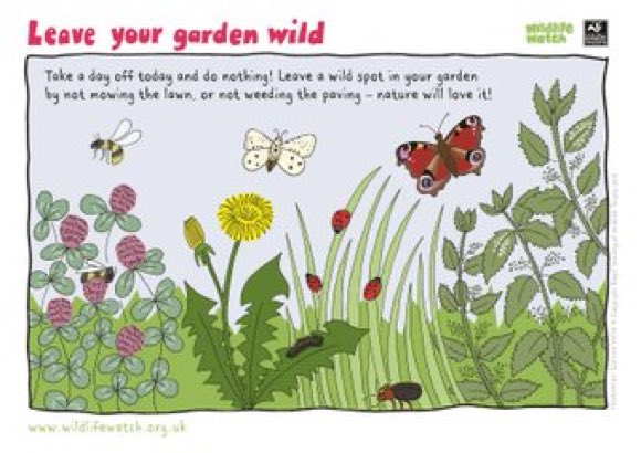 Please help wildlife in your garden by letting some areas grow wild! #wildlifegardening #gardening <br>http://pic.twitter.com/FJbqNdkHCO