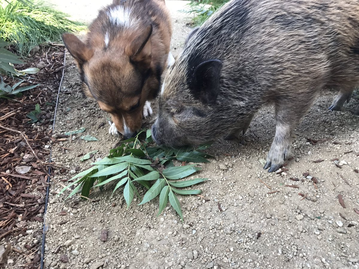Ricky Dillon On Twitter Oliver And Luna Chewing On A Branch