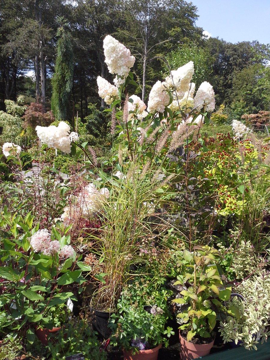Cool Gartentraum Beste Wahl #hortensien Und Gräser #unschlagbar #gartentraum #bamschoulbeckerpic.twitterreview/pjctjpc705