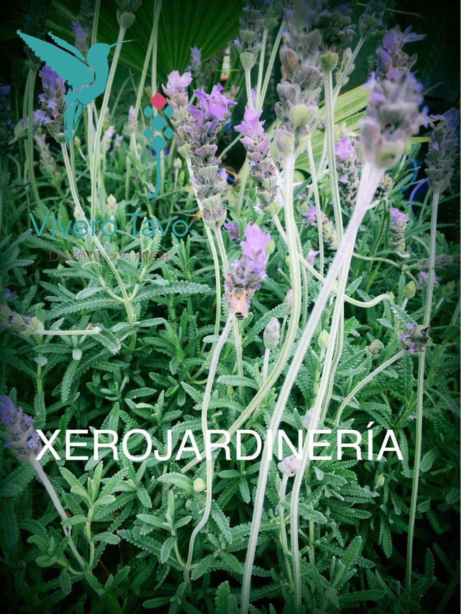 Vivero tavo reas verdes de bajo consumo de agua vis tanos for Vivero feroxcactus