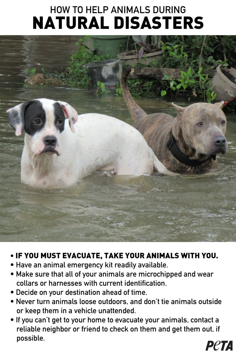 URGENT: As #HurricaneIrma2017 approaches, do not leave your animals behind or they could die! Their lives depend on YOU 💔