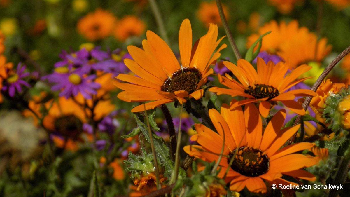 Roeline On Twitter Postberg Was Beautiful Flowers Everywhere And