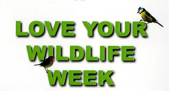 test Twitter Media - Own or work at a café/restaurant then you can help raise funds for wildlife. Visit https://t.co/RIndmPazD3 for details #loveyourwildlife 🦊🦉 https://t.co/zuTV3xmZ97