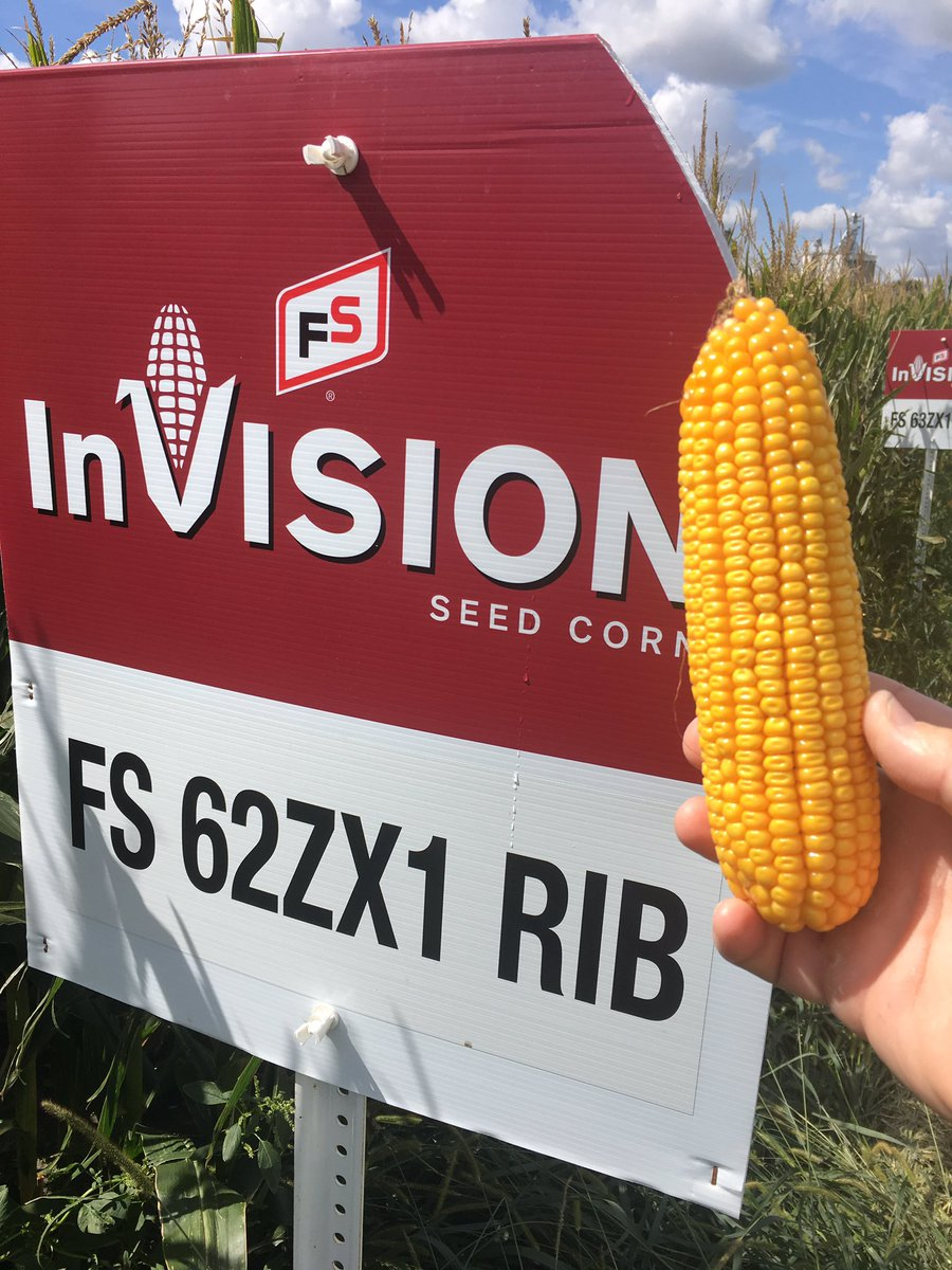 Tom Walsh Twitter Walking The Fs Invision Corn Plot W J Wierman Seed Diagram Kernel Illinifs Looks Great But Maturation Is Not In Any Hurry