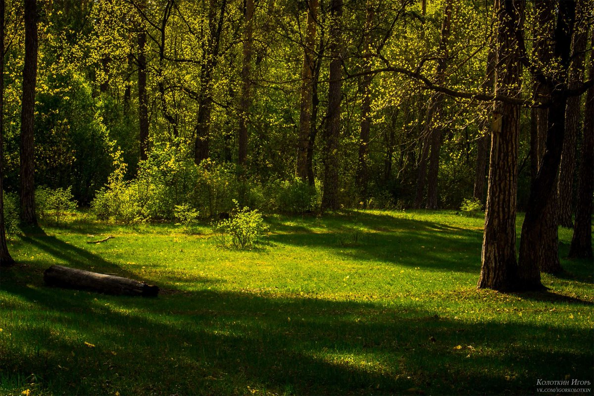 лес самара картинки элементы