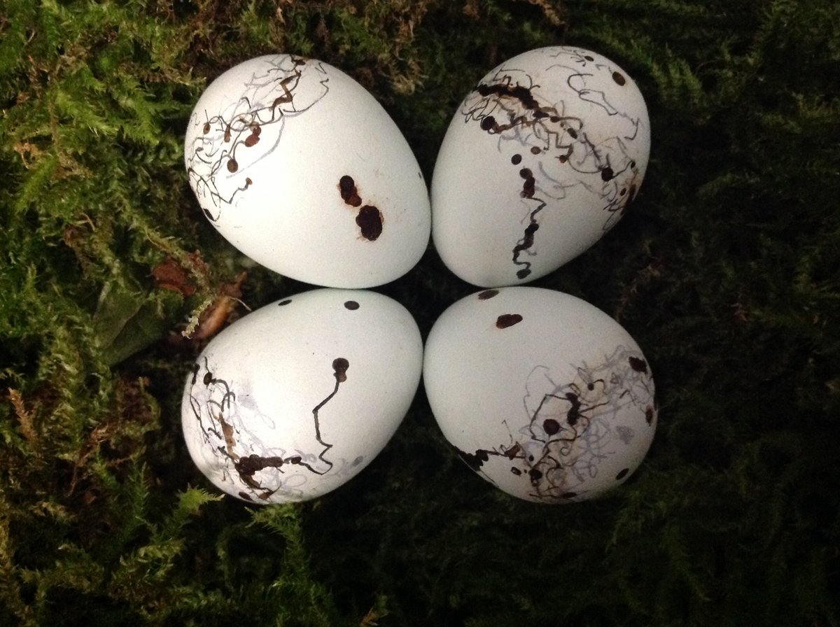 "Robert Macfarlane on Twitter: ""Scribble-lark (yellowhammer) eggs?… """
