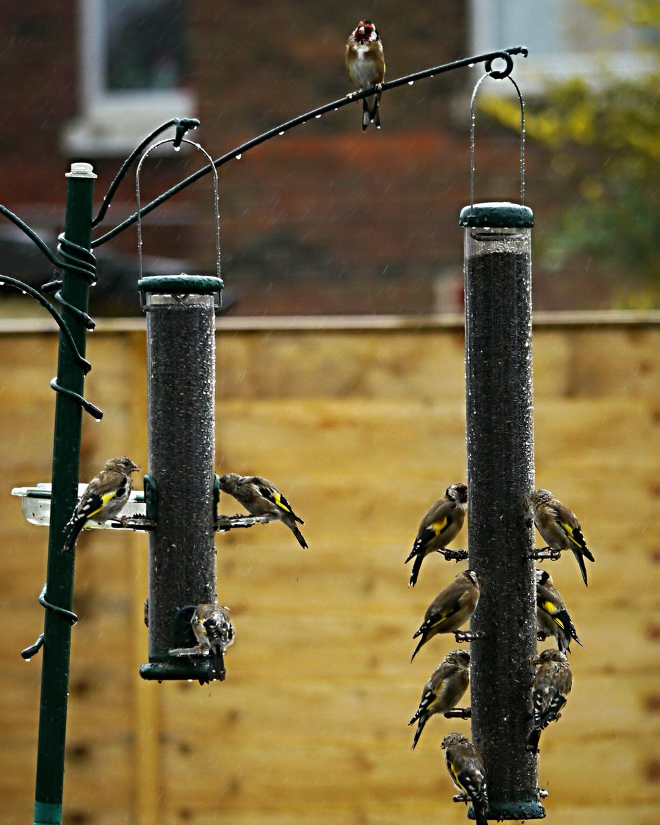 I hope #Goldfinches aren&#39;t superstitious about 13 @ the feeder! @ Eastleigh  https://www. instagram.com/p/BYxxf7Nh4bO/  &nbsp;  <br>http://pic.twitter.com/hoAOHGDsMH