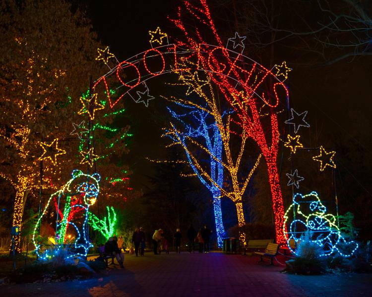 zoolights - Twitter Search