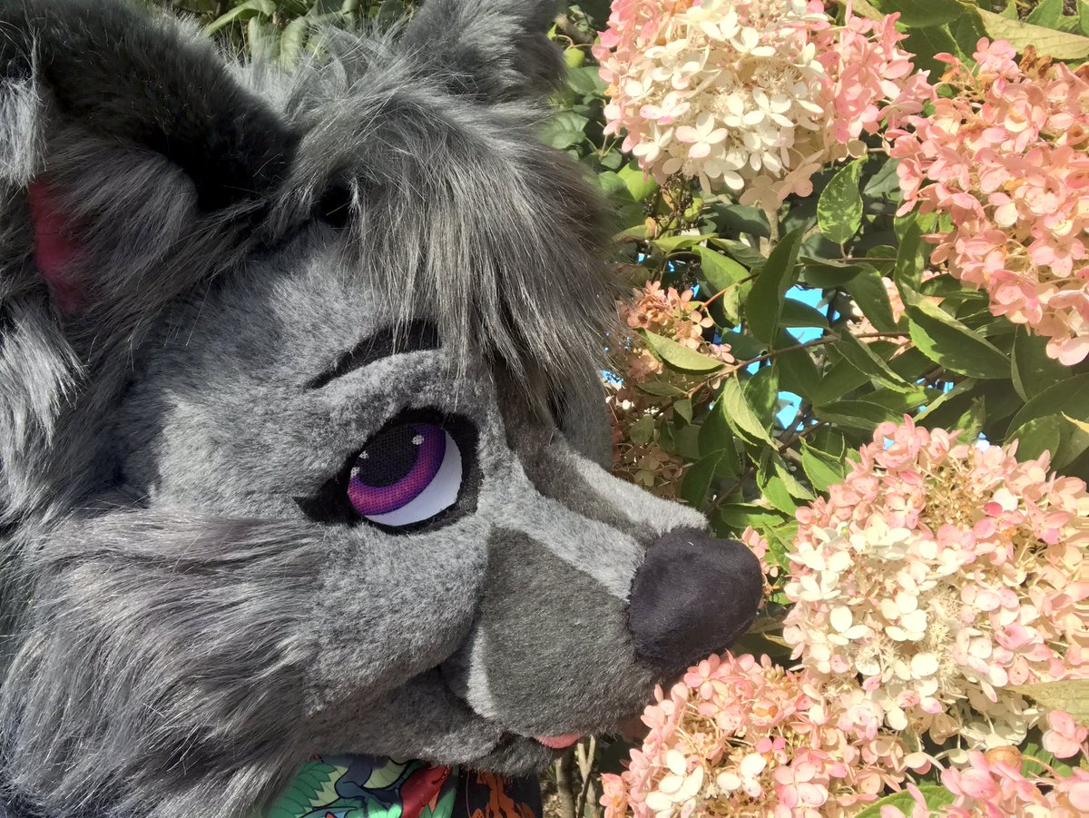 Happy #fursuitfriday from a slightly distracted #crazwolf! She's wondering if these flowers would be a tasty dinner!  #battitudestudios <br>http://pic.twitter.com/lrQLXvoQYM