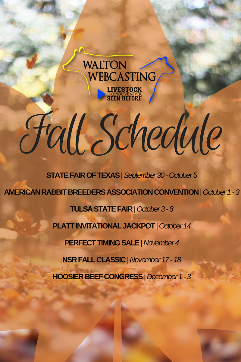 Walton webcasting on twitter fall is right around the corner be loading seems to be taking a while junglespirit Choice Image