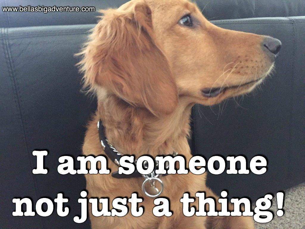 Retweet if you agree!   http://www. bellasbigadventure.com  &nbsp;   #dogs #puppy #dog #golden_retriever #adventure #travel #explore #puppies #animals #pets #USA<br>http://pic.twitter.com/6LTHmc8asb