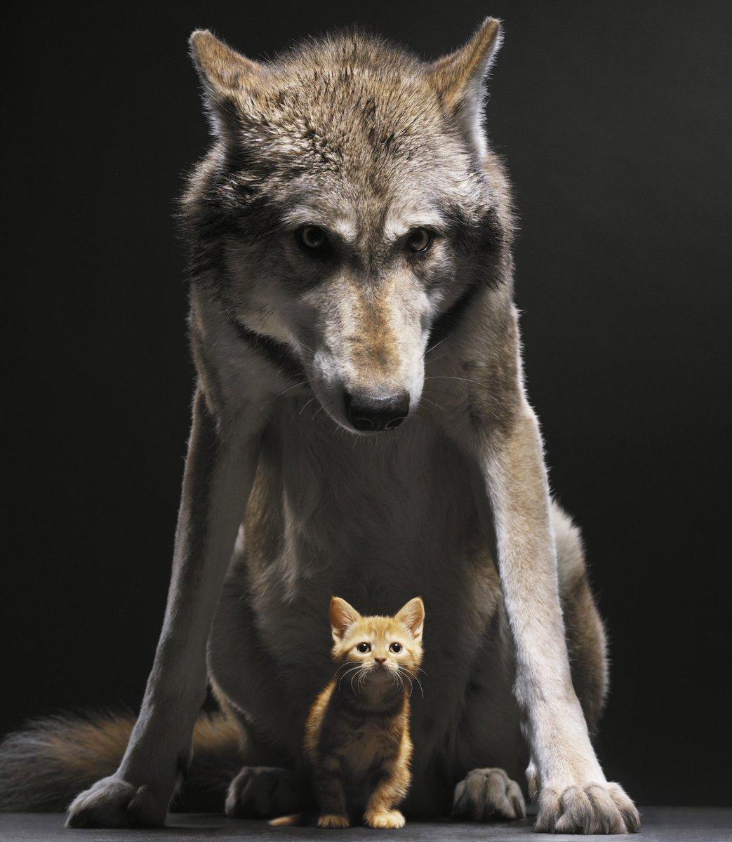 Смешные картинки про волка с надписями, открытку поздравлением открытки