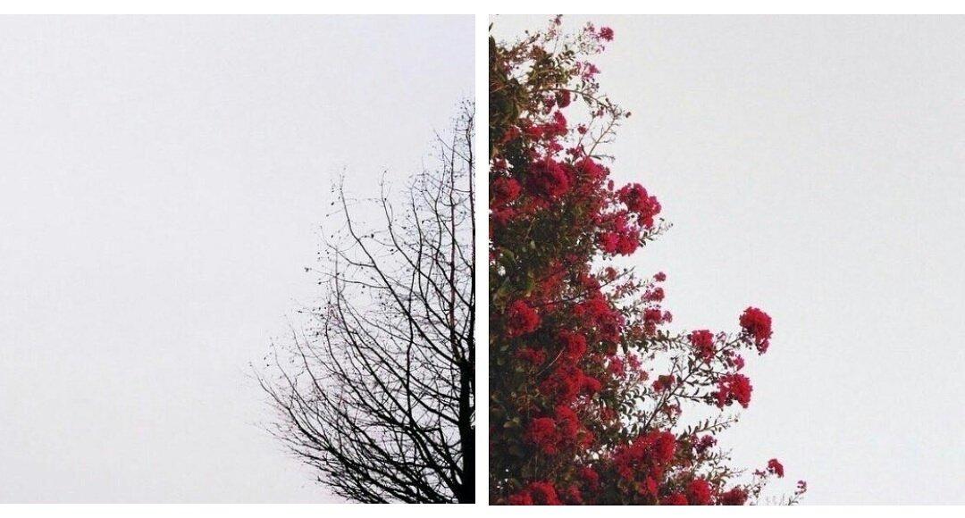 Yaprak döker bir yanımız, Bir yanımız ba...