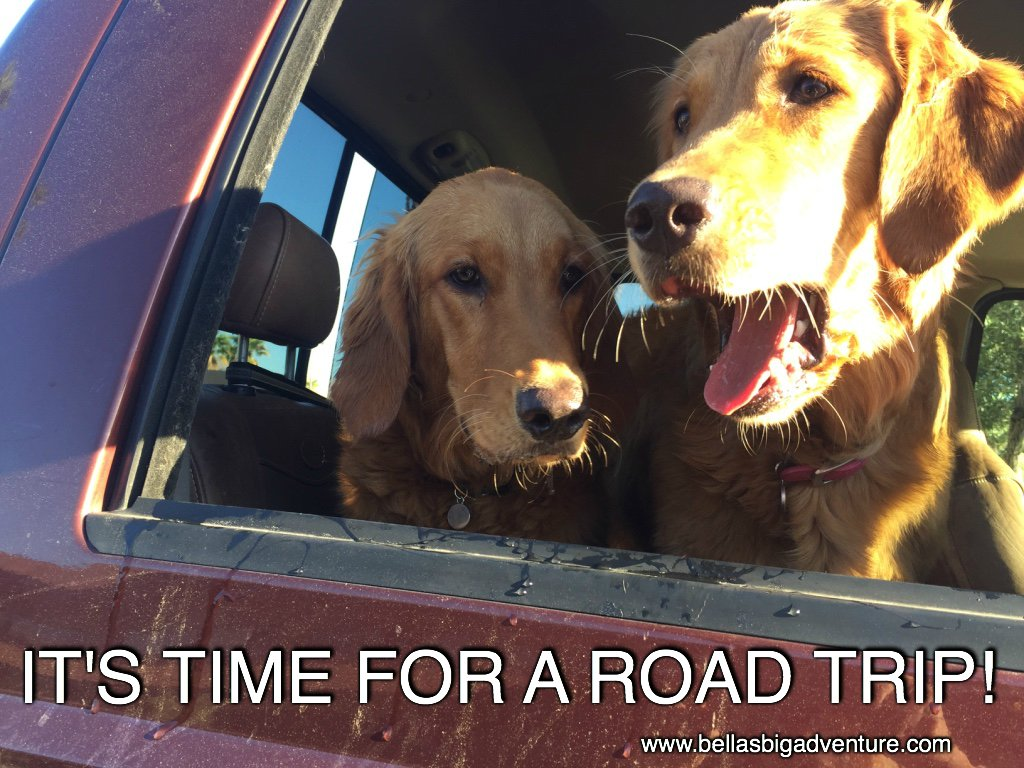 My sister Lola &amp; I love our #adventure&#39;s.  Would you subscribe to our blog &amp; follow our journey around #America!    http://www. bellasbigadventure.com  &nbsp;  <br>http://pic.twitter.com/RMFiOBJKfa