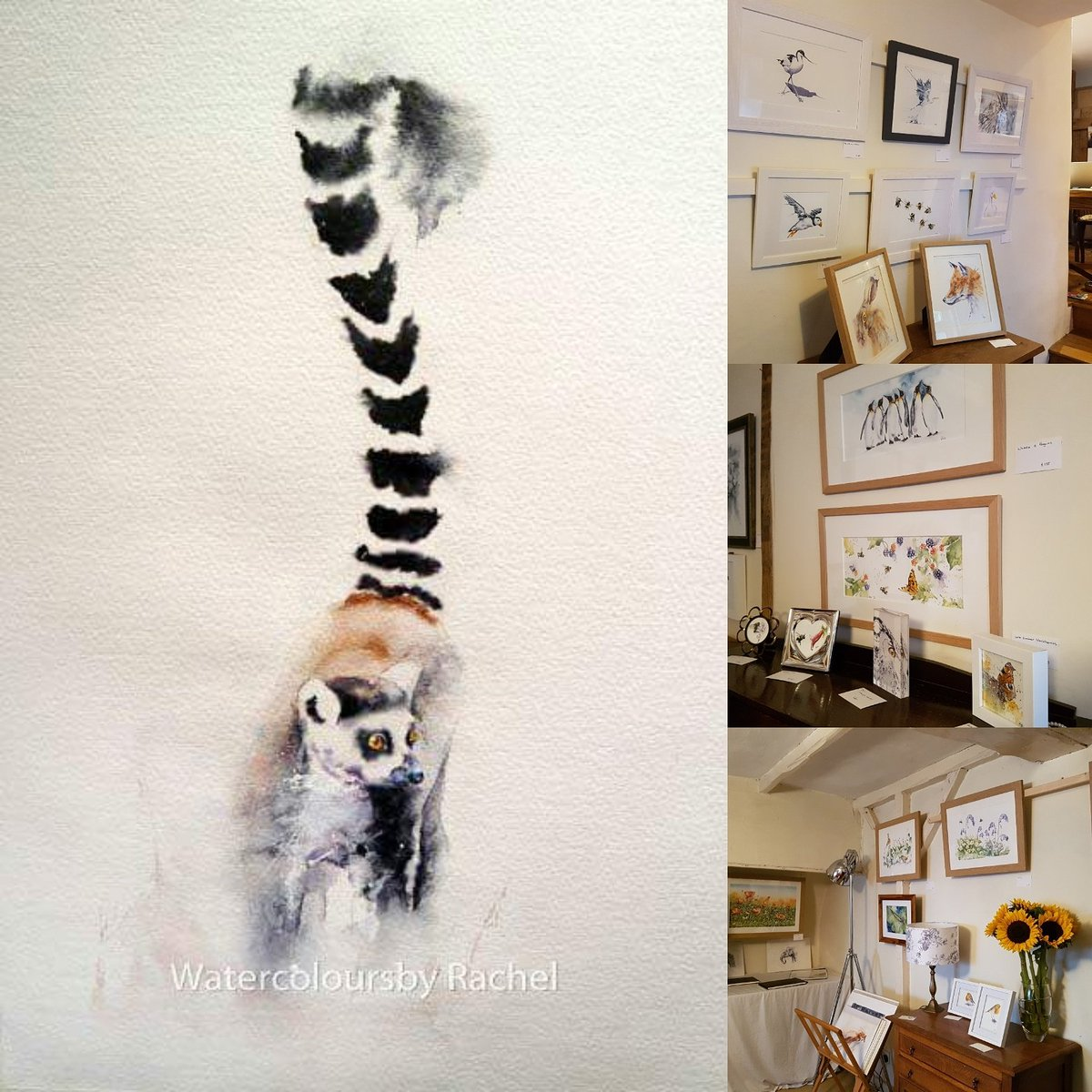 Walls rehung all ready for Day 2 #devonopenstudios #watercolour #wildlife #BigArtBoost #wildlifeartist #painting #art #devon #wildflowers <br>http://pic.twitter.com/uE7jquOegA