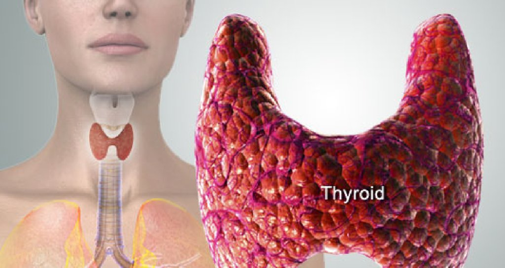 Image result for nervous thyroid