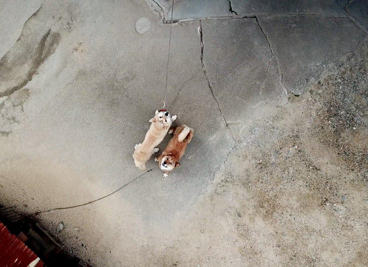 上空のドローンを見上げるイヌ