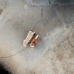 上空のドローンを見上げるイヌ pic.twitter.com/bcOzAQZImP