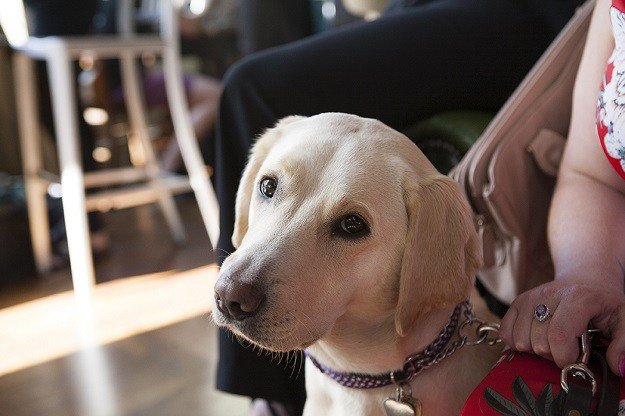 'First Blind Dates' raise awareness for Guide DogsWeek https://t.co/XiBCB966mF