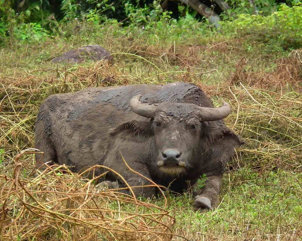 Water Buffalo - Animals  http:// eyesshare.co.uk/ProjectRetail/ Default/Translator.php?page=Main.html&amp;subpage=/WebRetail/Pages/Shop/CreatorProducts.html&amp;creator=6&amp;product=41&amp;app=eyes &nbsp; …  #composition #shutter <br>http://pic.twitter.com/5dLQgX8cZJ