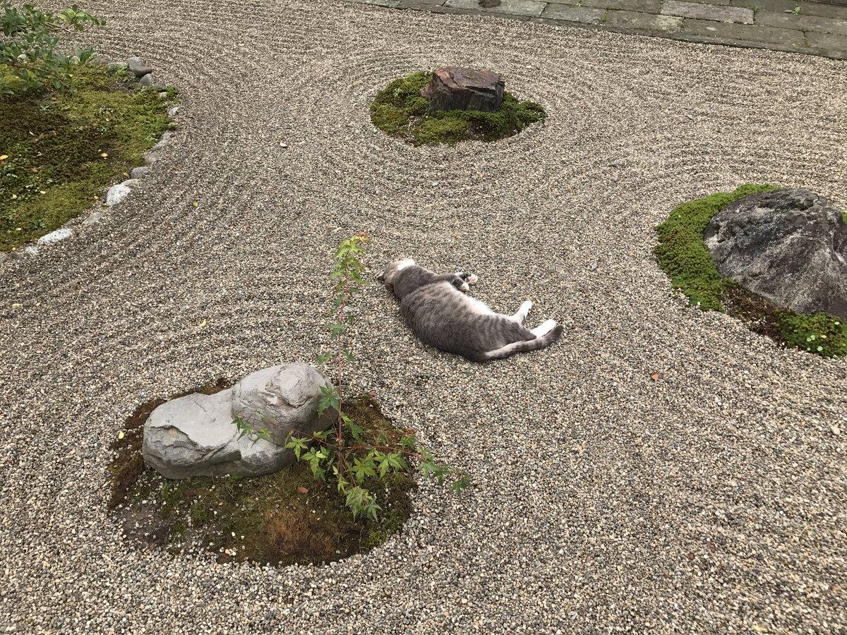 そしてこうなりました…笑  #荘内神社