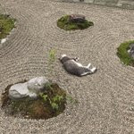 そしてこうなりました…笑#荘内神社 pic.twitter.com/l9Bm3IsDLj