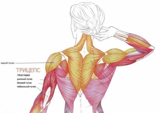 Упражнения на гимнастическом мате