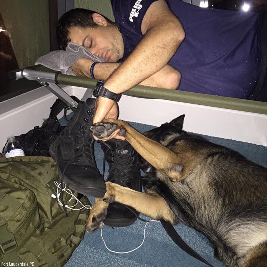 The Fort Lauderdale Police Department tweeted this photo of an officer and his K-9 getting some rest together during Hurricane Irma