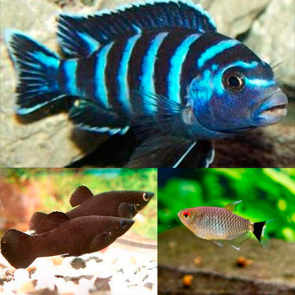 Золотая рыбка чебоксары каталог