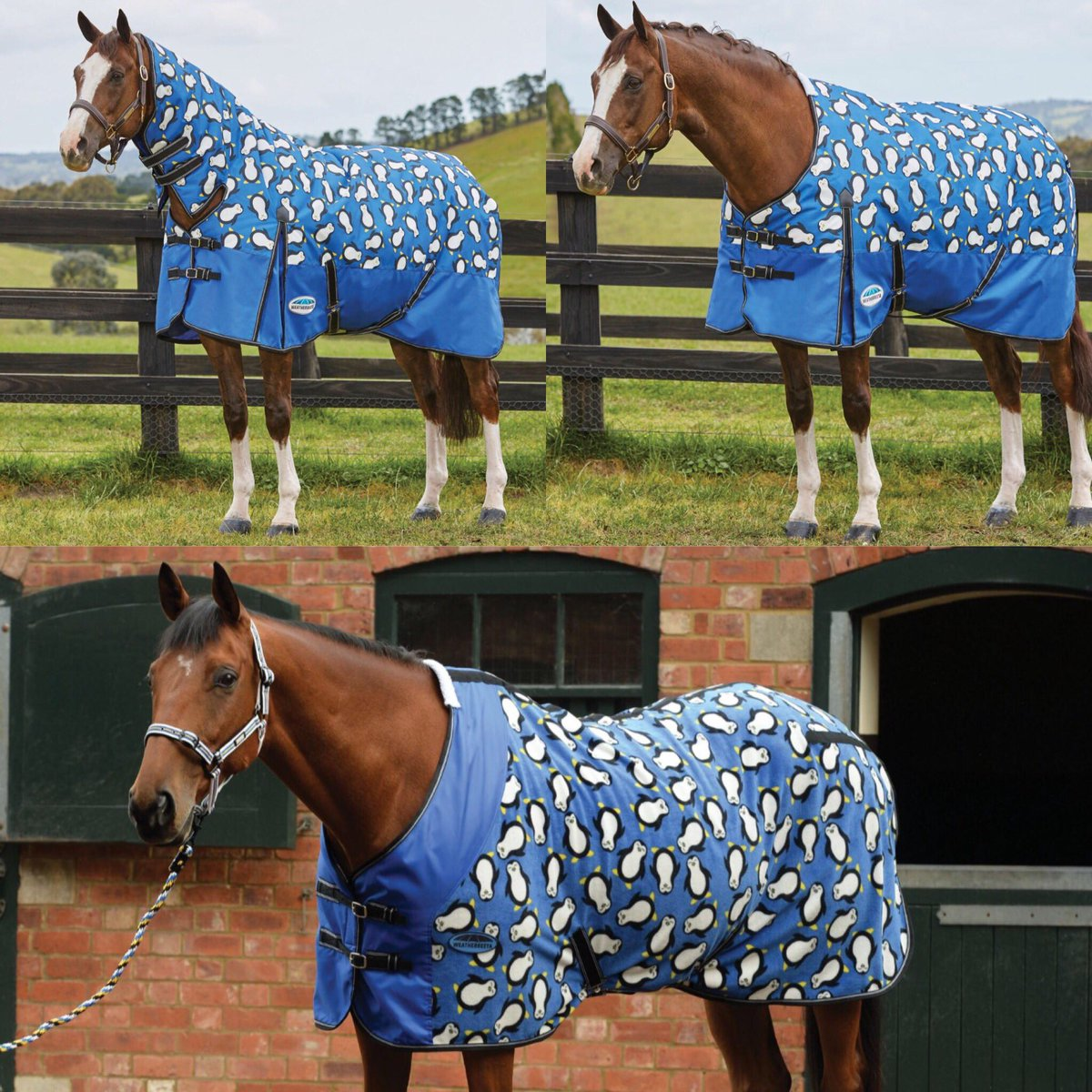 Check Out These Penguin Print Horse