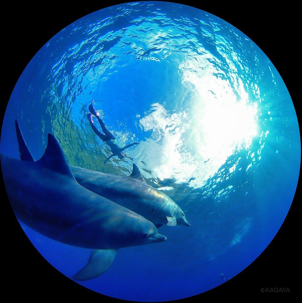 イルカの惑星。 (一昨日、御蔵島にて撮影)