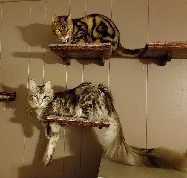 homemade cat tree pictures