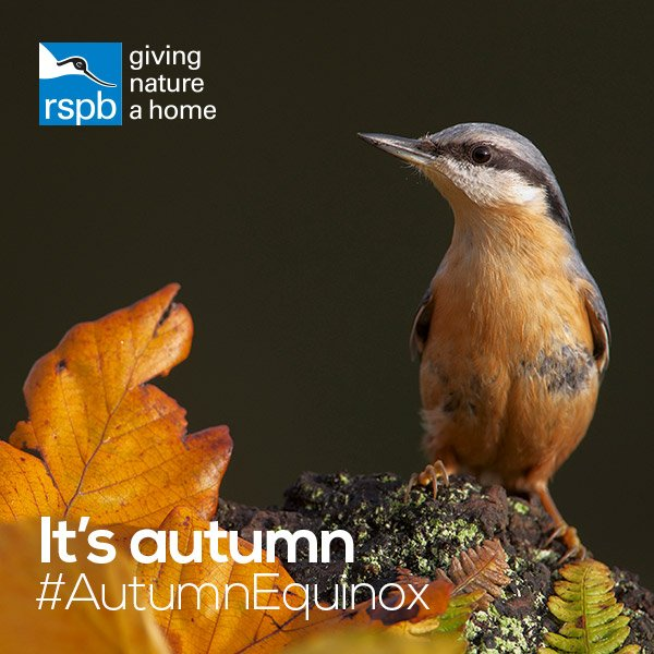 Today is #AutumnEquinox - get outside and see some incredible autumnal...