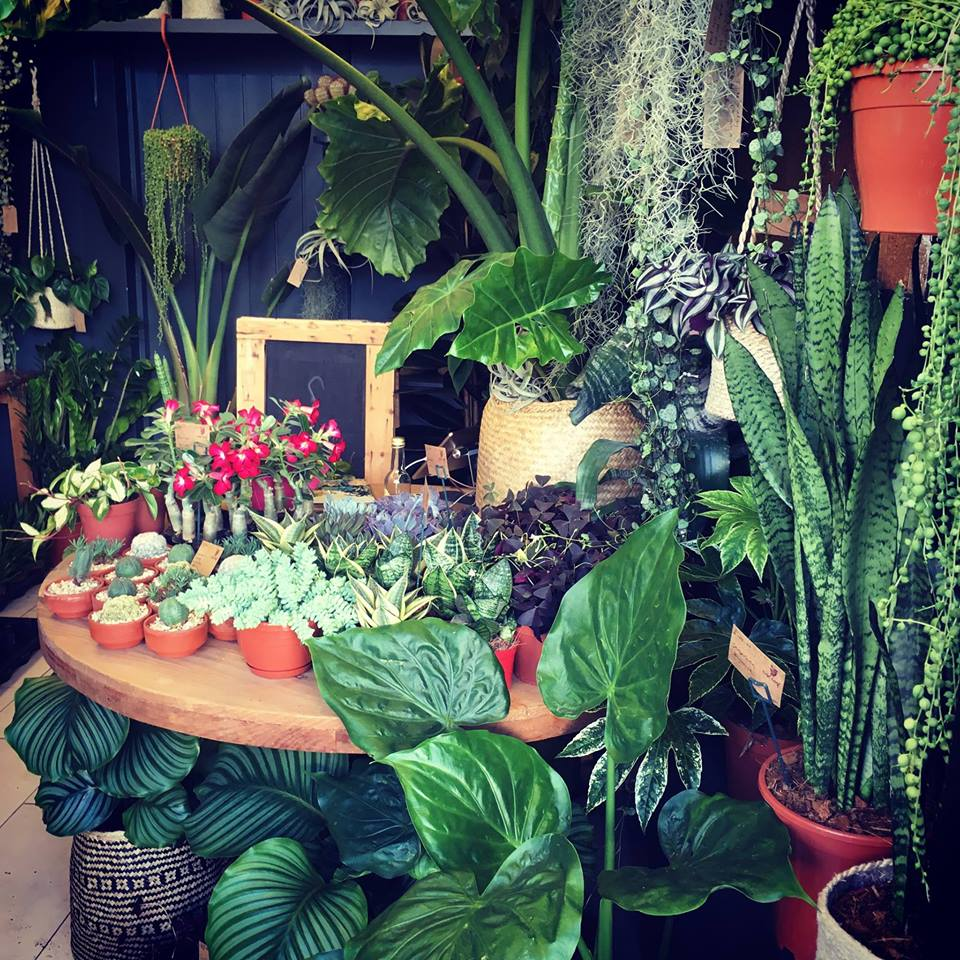 For exotic house plants
