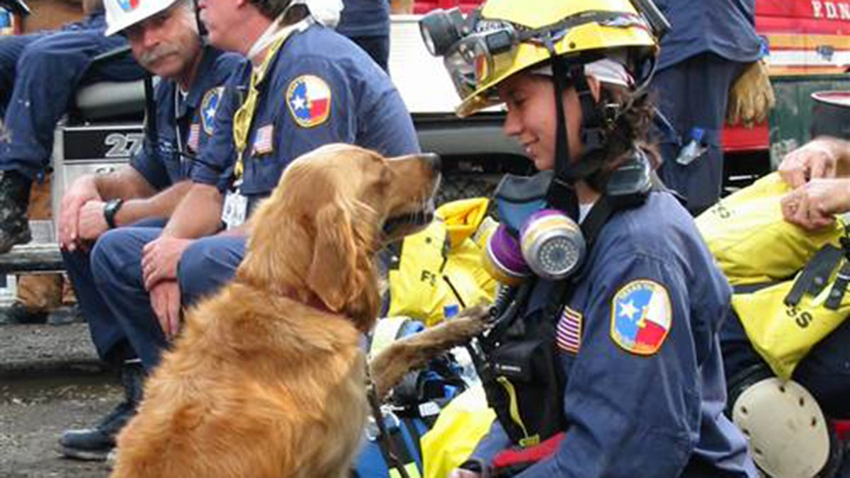 Last 9/11 Ground Zero search dog honored in area ravaged by Hurricane Harvey on.today.com/2xg2p1M