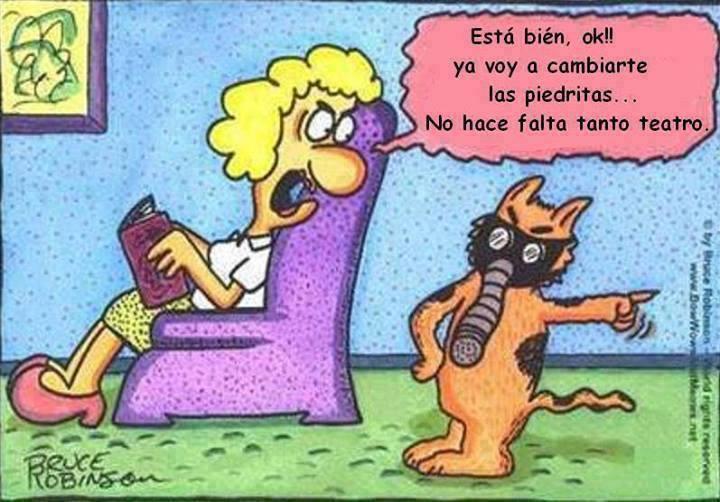 Sucia!!! #gatos #limpieza #arenero<br>http://pic.twitter.com/4OPClWiUai
