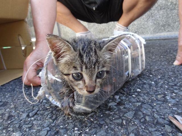 排水溝に落ちた子猫を救え!両親が子猫を助けた記録のまとめです。→
