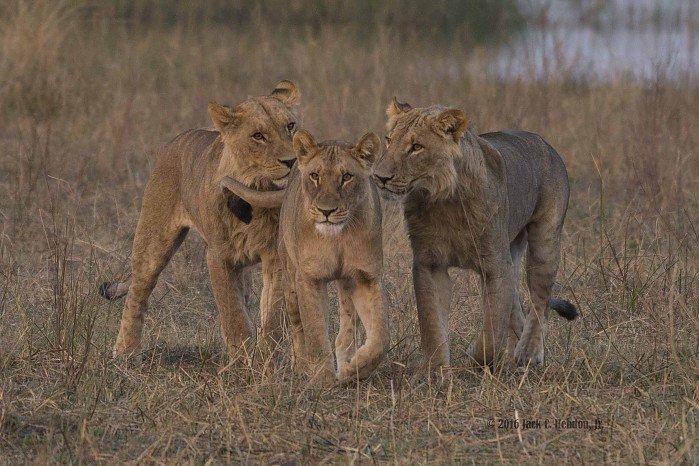 Wilderness safaris pressure washing