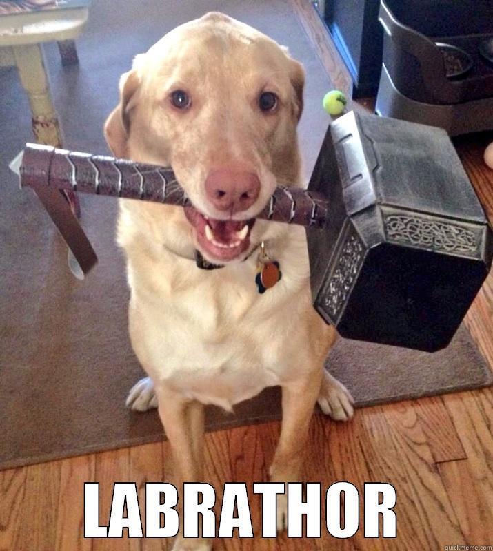 Bildergebnis für labrathor