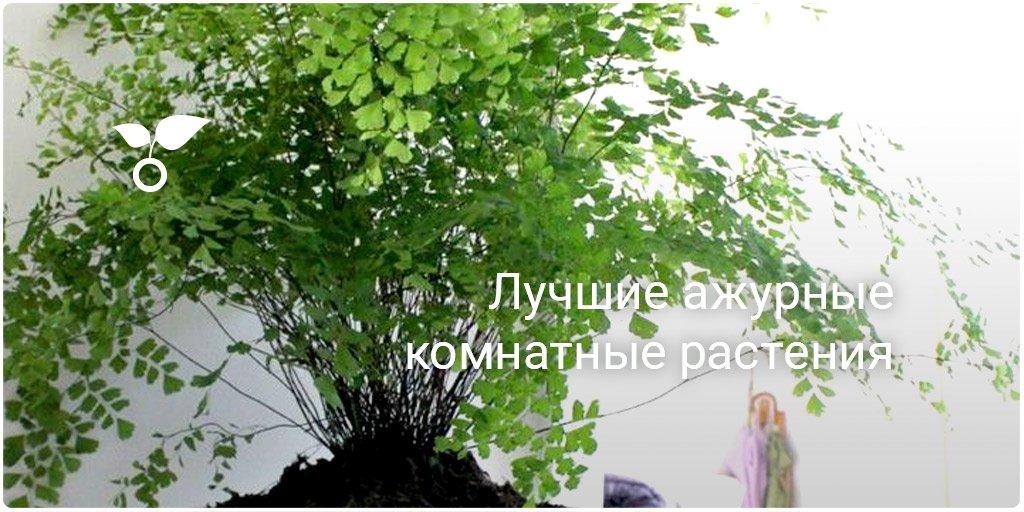 Комнатные растения скачать книгу бесплатно