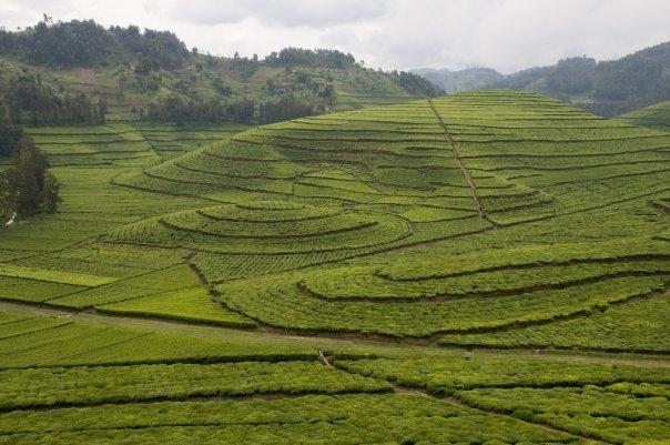 Pfunda Tea Factory